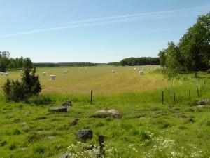 Fårhagen och nyskördad åker, sommar