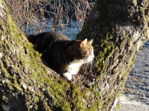 Katten Tusse i höstsolen. höst